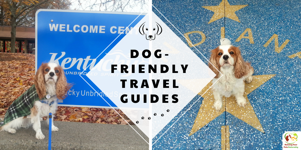 Travel guide for a fun dog road trip. Dog-friendly travel guides are a great way to plan your next dog road trip. #raisingyourpetsnaturally