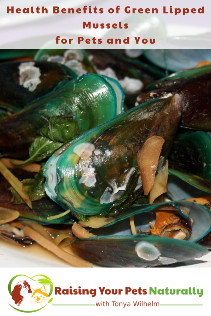 Health Benefits of Green-Lipped Mussels for Dogs and Cats. Mussels are great for joint pain and arthritis and so much more. #raisingyourpetsnaturally #greenlipped #mussels #musselsfordogs #realfoodfordogs #naturaljointcare #seniordogs #seniordogsrule