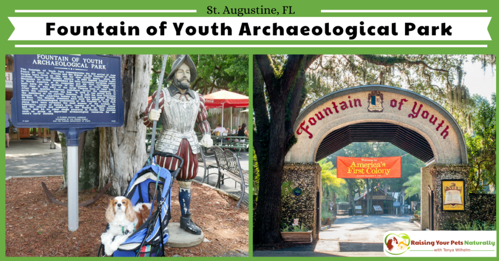 Dog-Friendly Fountain of Youth in St. Augustine Florida. Dog-friendly vacations are the best when your dog can participate in tourist attractions. During my stay in St. Augustine, Dexter and I visitied the Fountain of Youth. #raisingyourpetsnaturally #fountainofyouth #staugustine #visitstaugustine #dogfriendlystaugustine #dogfriendlyflorida
