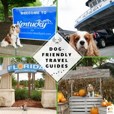 Dog-Friendly Travel