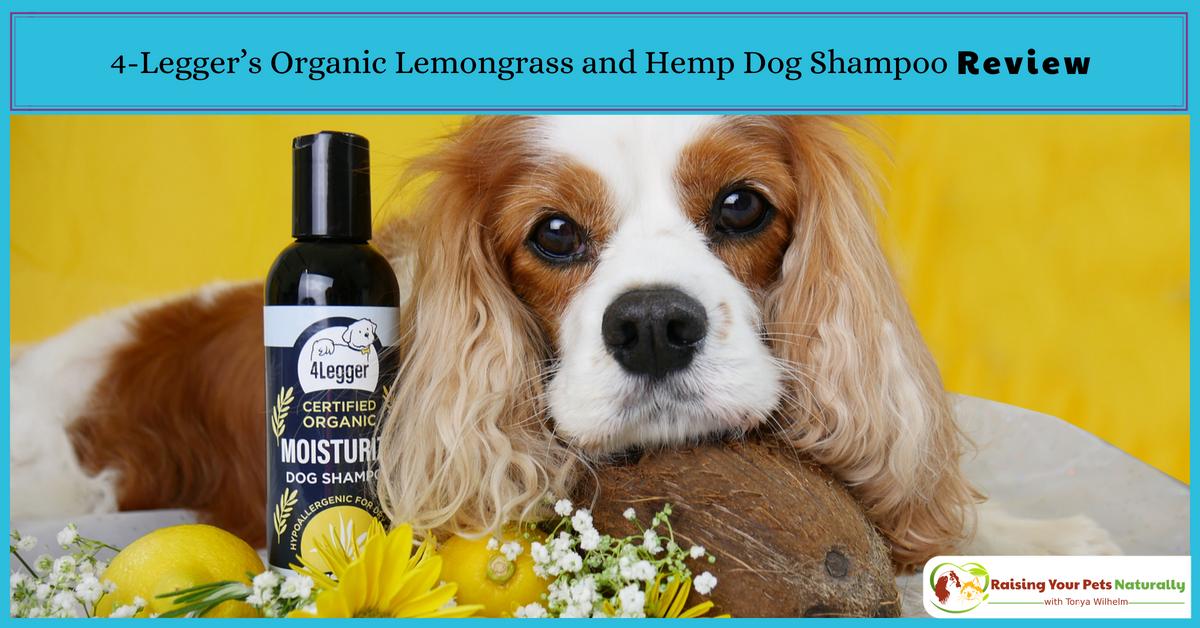 Natural Dog Shampoo Review: USDA Certified Organic Dog Shampoo with Lemongrass and Hemp by 4-Legger. Best smelling dog shampoo for dry skin and odor! #raisingyourpetsnaturally