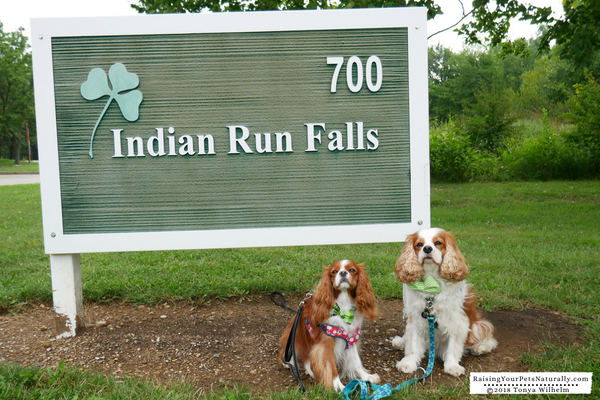 Dog friendly vacations in Dublin, Ohio