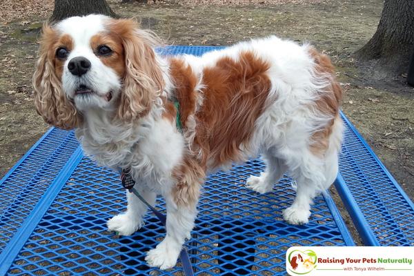 CBD oil for dogs with arthritis