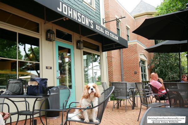 Dog-Friendly Ice Cream Shops in Ohio