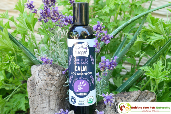 Best organic and natural dog shampoo for dry skin on dogs. 4-Legger USDA Certified Organic Lavender Dog Shampoo Review. #raisingyourpetsnaturally