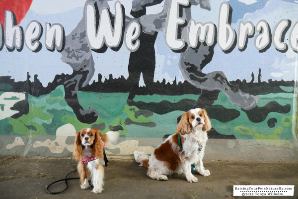 Best all inclusive dog vacations in Ohio