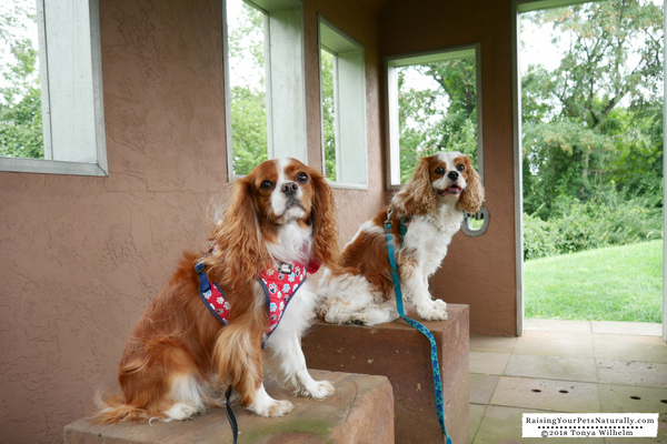Vacation spots that are dog-friendly in the Midwest