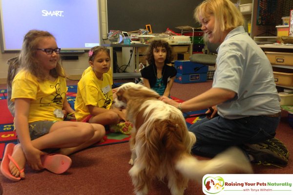 Best dogs to train for therapy dog