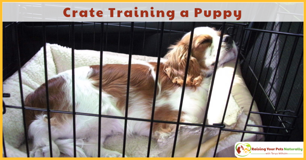 Crate training a puppy is easy with these simple steps. Learn how to crate train a puppy today. #raisingyourpetsnaturally