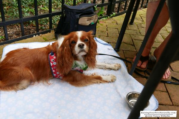 Dog-Friendly Dublin, Ohio Restaurants- La Chatelaine