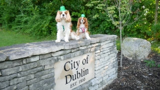 Dog-Friendly Travel Tips & Guides