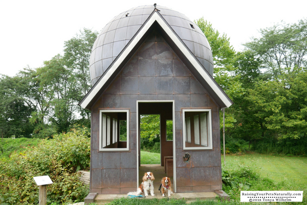 Dog-friendly attractions and sights in Ohio
