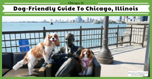 Dog-Friendly Chicago