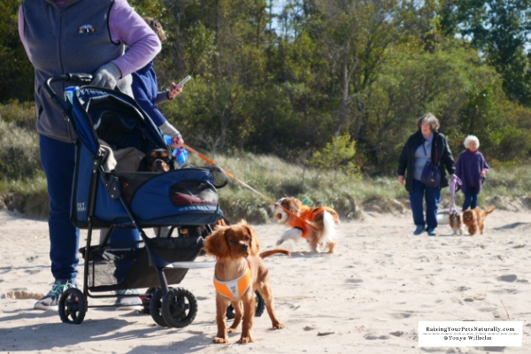 Dog-Friendly Tourism Initiative and Dog-Friendly Vacations and Travel. The Dog-Friendly Tourism Initiative isn't just for visitors; it benefits local dog families and business alike. #raisingyourpetsnaturally