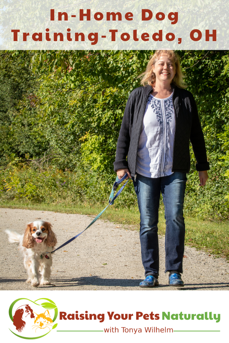 Toledo Metro Private Dog Training and Trainers   Alternative to Toledo Board and Train and Drop-Off Dog Training. Positive and effective dog training in your home. #raisingyourpetsnaturally #toledodogtraining #toledodogtrainers