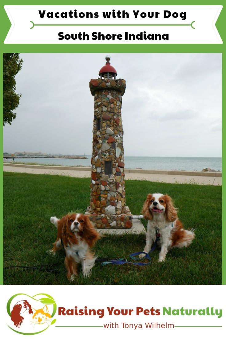 Dog-friendly Northern Indiana things to do along Lake Michigan. Dog-friendly South Shore things to see and do. #raisingyourpetsnaturally #dogfriendlyvacations #dogfriendlyindiana #midwestvacations #dogfriendlymidwest