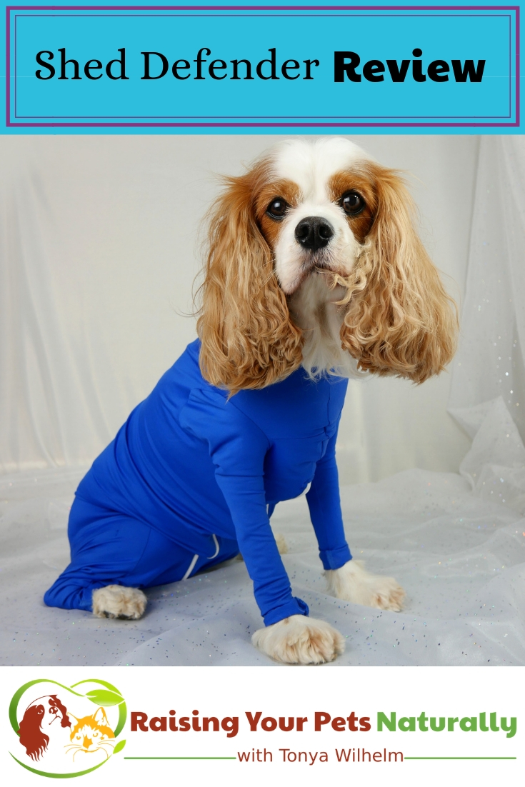 Shed Defender Onesie for Dogs Review. The Shed Defender had a lot of useful applications beyond containing a dog's shedding. #raisingyourpetsnaturally #sheddefender #dogonesie #naturalpetproducts #tickprevention