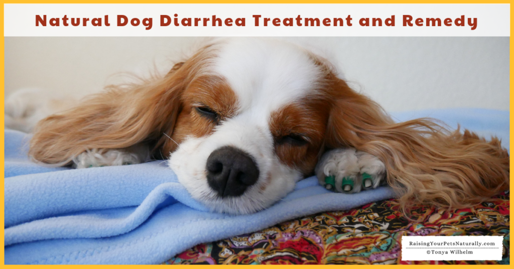 Dog Diarrhea Treatment and Remedy. Do you know how to tell if your dog's diarrhea warrants a trip to the veterinarian or if you can treat your dog's diarrhea at home? #raisingyourpetsnaturally