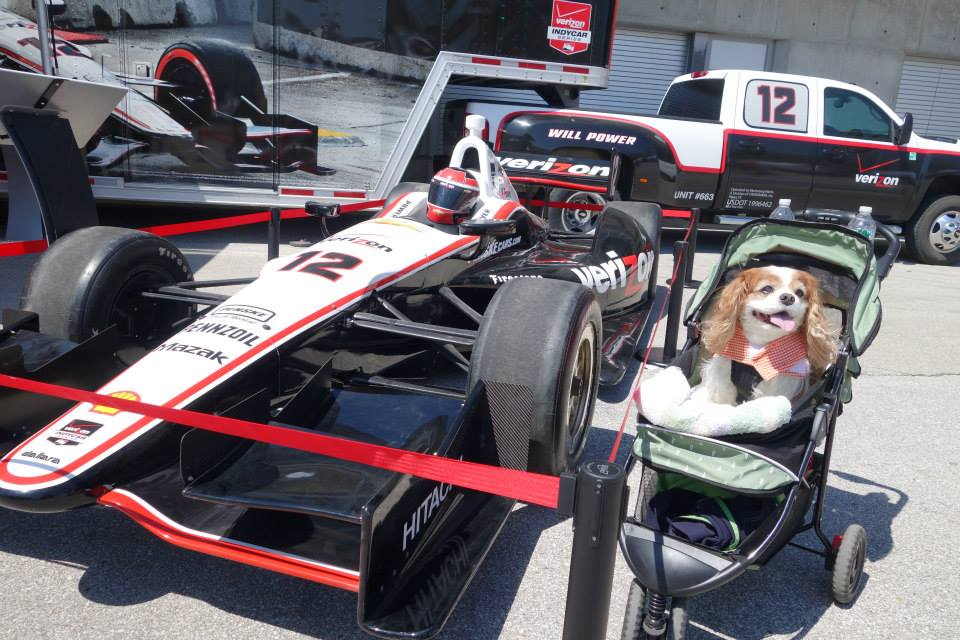 This April, Dexter and I will be walking the historic Indianapolis Motor Speedway track and even have the chance to kiss the bricks, all while supporting IndyHumane. #raisingyourpetsnaturally