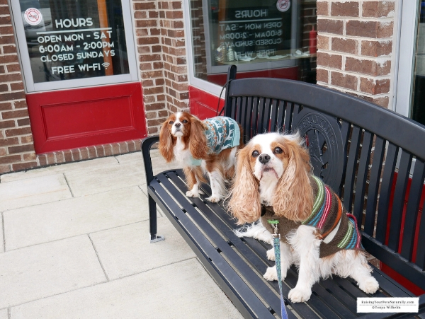 Dog-Friendly Festival Country Indiana Road Trip. A fun Midwest weekend road trip with a dog. #raisingyourpetsnaturally