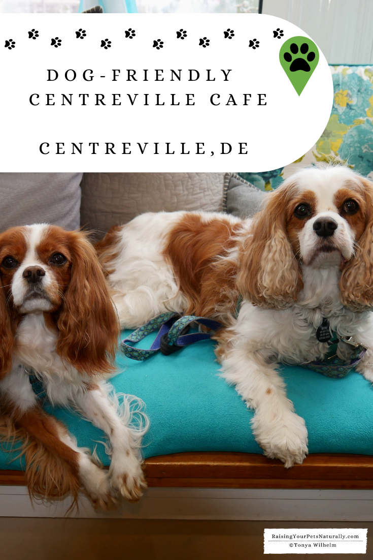 Dog-Friendly Restaurants in Delaware. INDOOR Dog-Friendly Centreville Cafe. #DextersDestinations #RaisingYourPetsNaturally #DogFriendly #PetFriendly #DogFriendlyCafes #DogFriendlyDelaware #TravelingwithDogs