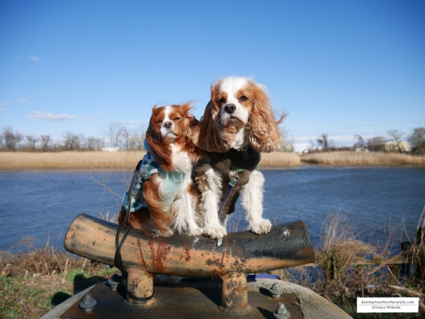 Dog-Friendly Wilmington, Delaware Travel Guide. Dexter and Levi's Dog Road #raisingyourpetsnaturally