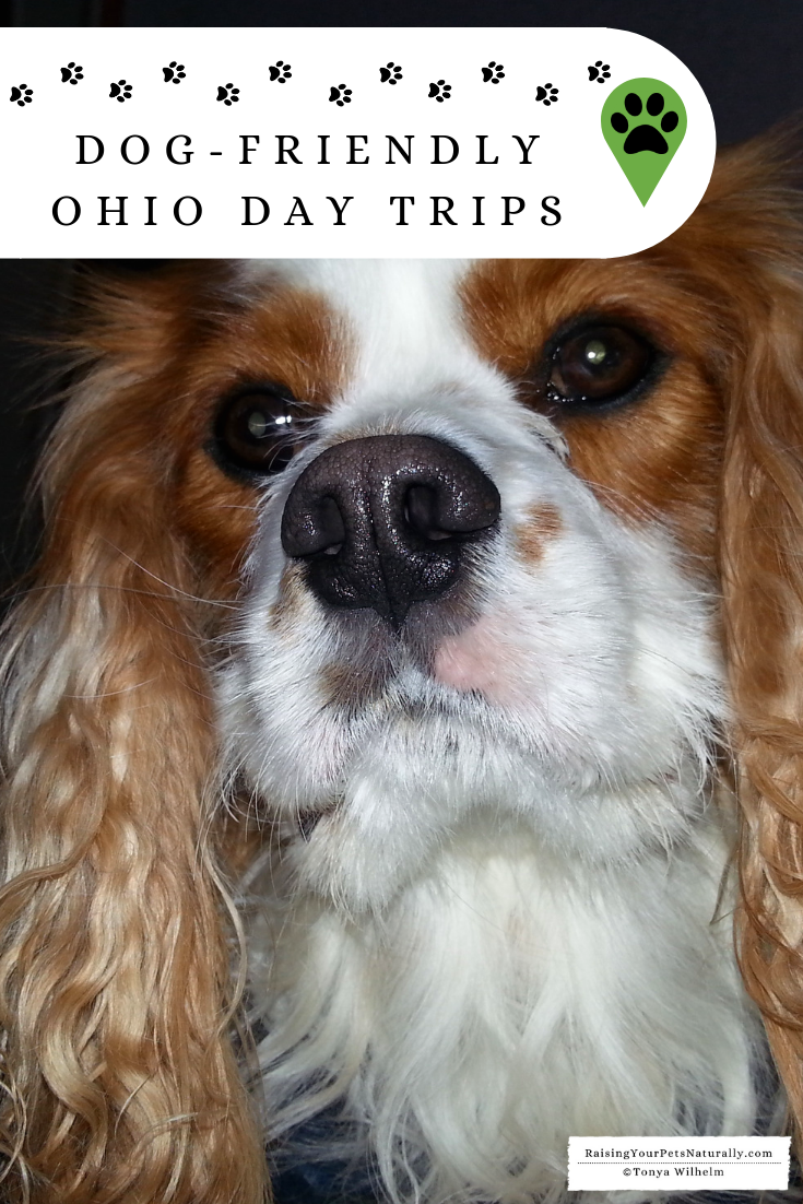Dog-Friendly Winter Road Trips | Dog-Friendly Ohio Day Trips #dogfriendlytravel #travelingwithdogs #dogfriendly #petfriendly #vacationswithdogs #ohioroadtrips