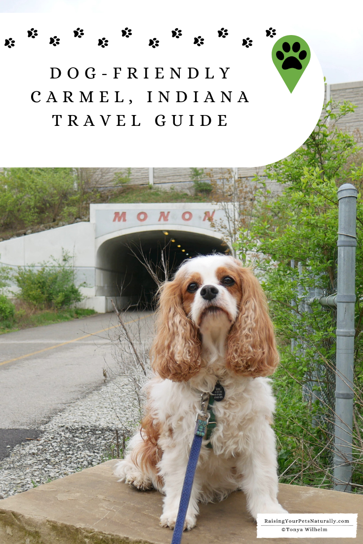 Dog-Friendly Vacations in the Midwest. Our Dog Road Trip to Carmel, Indiana. #DextersDestinations #RaisingYourPetsNaturally #dogfriendly #midwesttravel #dogfriendlyindiana #petfriendly #travelingwithdogs #dogroadtrip #dogfriendlyvacations #roadtripwithdog