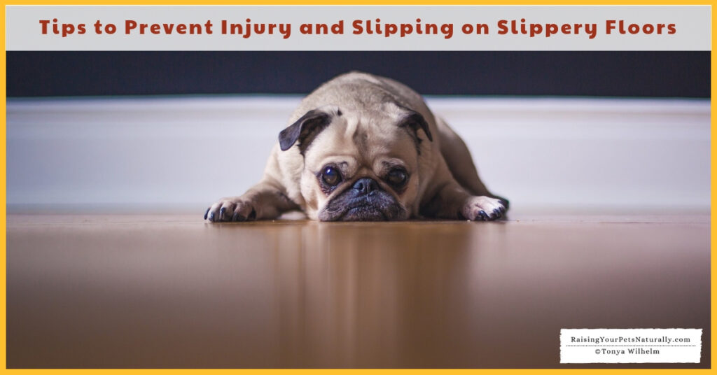 Are Hardwood Floors Safe for Your Dog? Tips to Prevent Injury and Slipping on Slippery Floors. #raisingyourpetsnaturally