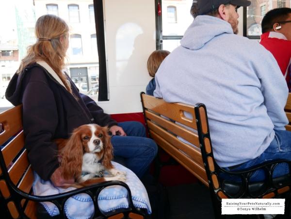 pet friendly tours