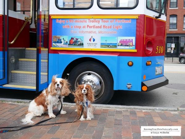 Dog friendly trolley rides