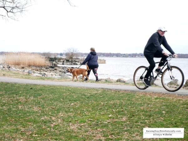 What to do in Delaware with your dog