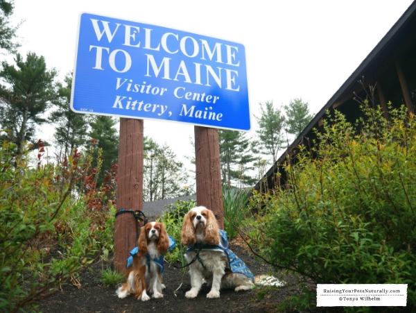 Dog-friendly Maine activities