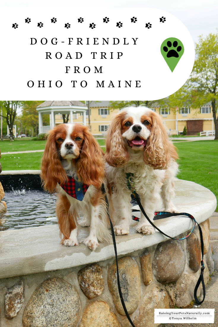 Dog-Friendly Road Trip From Ohio to Maine | Why I Chose to Rent a Car for The Trip