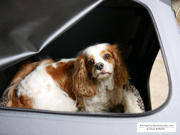 Best travel carrier for dog