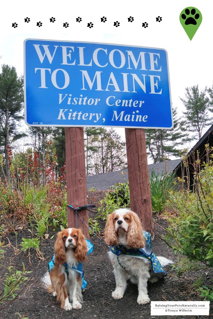 Pet-Friendly Portland Maine Travel Guide | Bucket List Dog-Friendly Travel