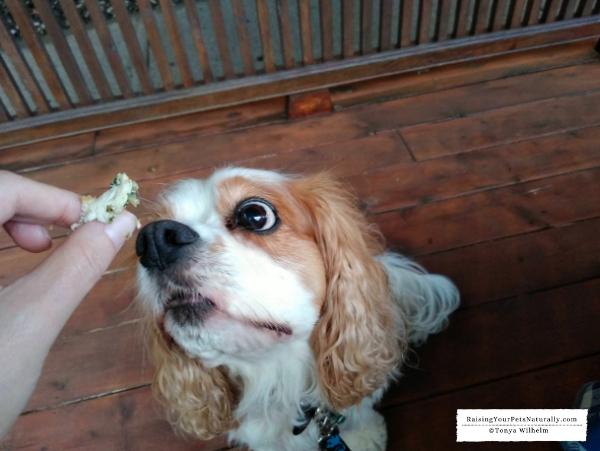 Dog-friendly Maine road trip