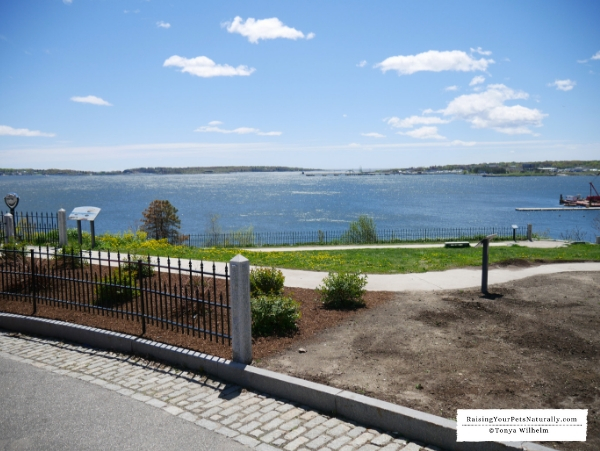 Pet friendly attractions Maine