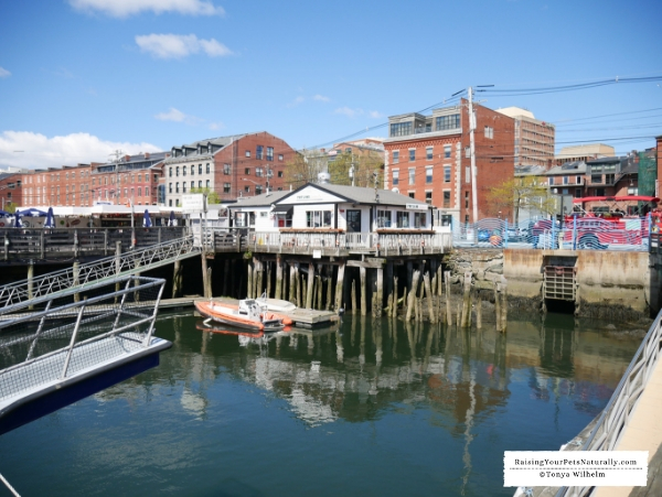 Best Sights in Portland, Maine