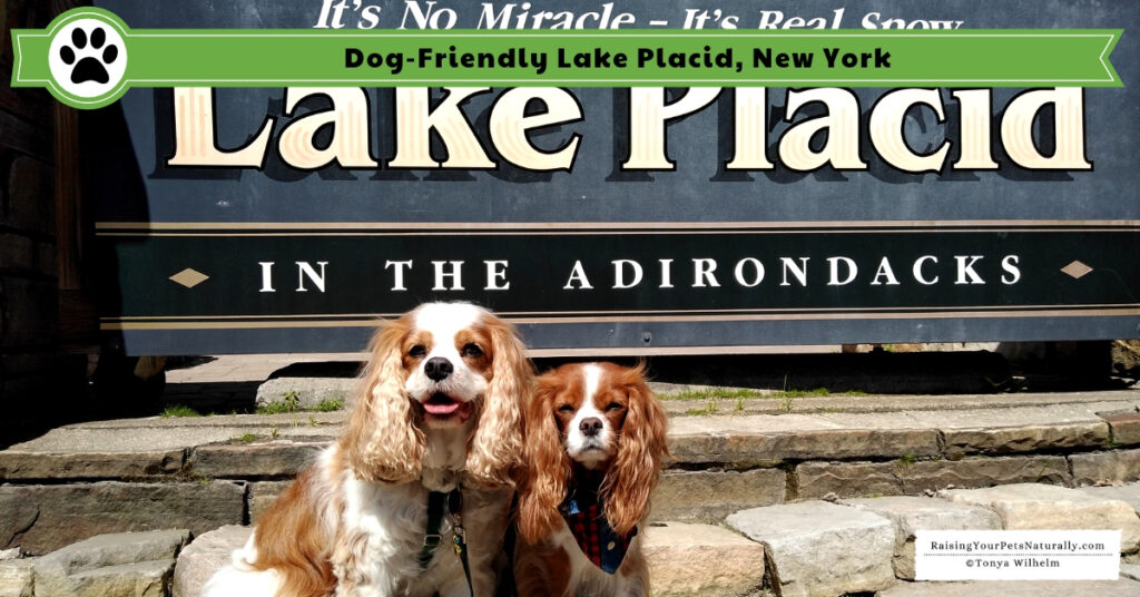 Best dog friendly vacations