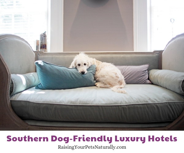 Luxury hotels in Virginia that allow pets