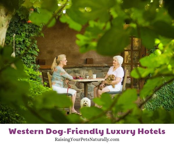 Best pet friendly hotels in Arizona