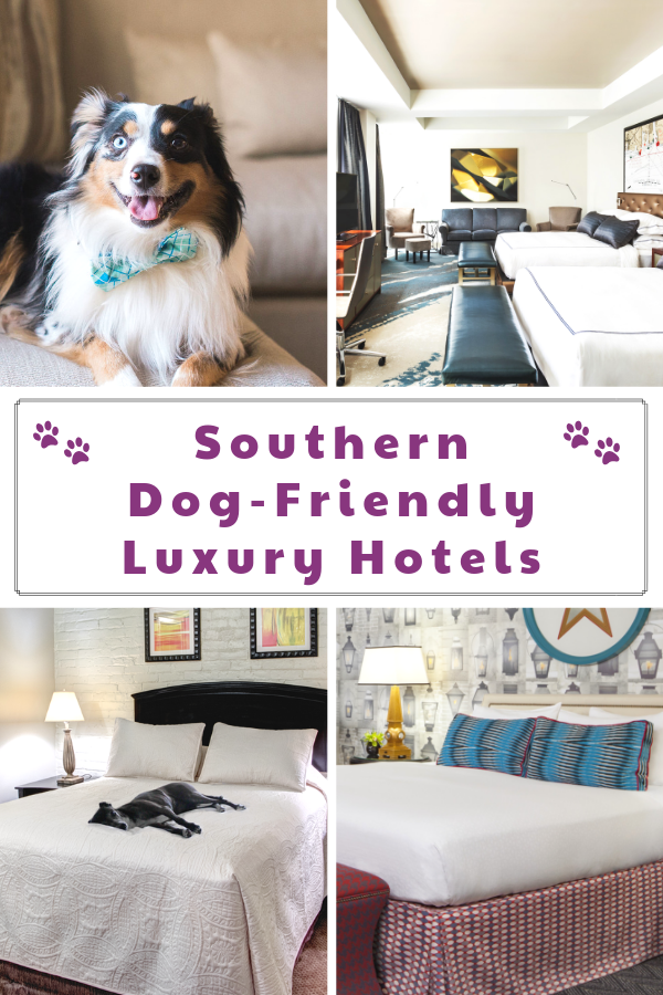 Top Dog-Friendly Resorts and Luxury Pet-Friendly Hotels in the South