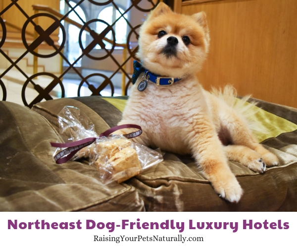 Luxury hotels in PA that allow pets