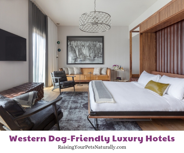 Five star dog friendly hotels in CA