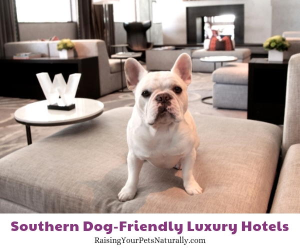 5 star Austin pet friendly hotels