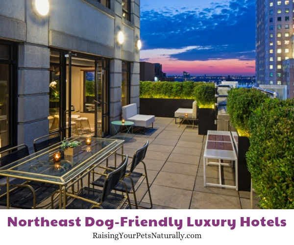 New York best dog friendly hotels