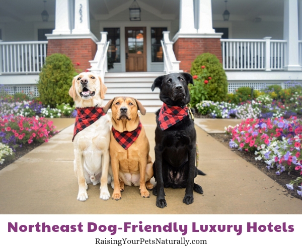 East dog-friendly hotels