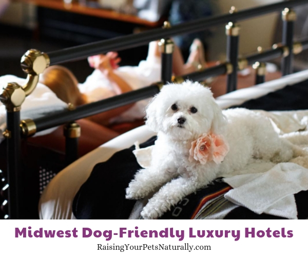 Best luxury hotels that are dog friendly