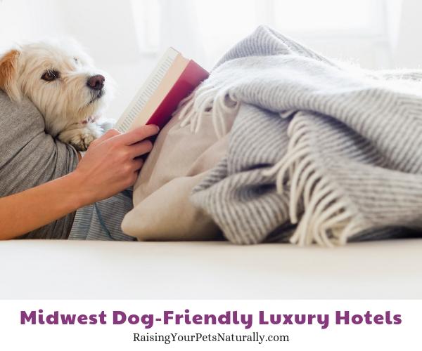 Best dog-friendly hotel chains